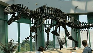 Acrocanthosaurus skeleton (1).jpg