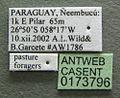 Acromyrmex heyeri casent0173796 label 1.jpg