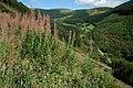 Afon Angell valley, Dyfi Forest - geograph.org.uk - 1453457.jpg