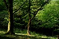 Afternoon in the Wood (27885804417).jpg