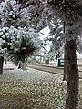 Ahlatlıbel, 06805 Çankaya-Ankara, Turkey - panoramio (6).jpg