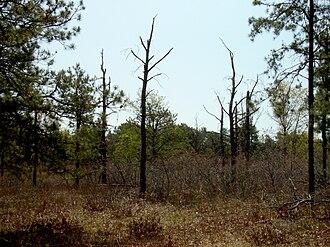 Albany Pine Bush - Image: Albany Pine Bush controlled burn