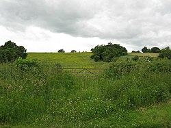 Alfrick - grassland opposite Crews Hill Court - geograph.org.uk - 840212.jpg