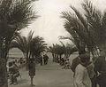 Algerie philippeville parc.jpg