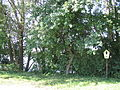 Am Brett-Teich, Rammenau pic01.jpg