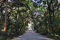 Amazing Trees (218544791).jpeg