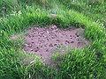 Ameisenhaufen in Wiese DSCF2011.jpg