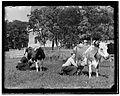 Amsteldijk thv 153 (voorheen tussen 105 en 107), foto 1 Jacob Olie (max res).jpg