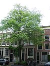 amsterdam lauriergracht 89 and 91 across