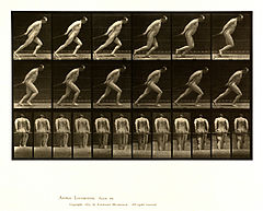 Animal locomotion. Plate 392 (Boston Public Library).jpg