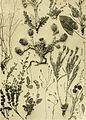 Annalen des Naturhistorischen Museums in Wien (1913) (17580581333).jpg