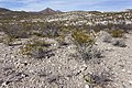 Apache Canyon - Flickr - aspidoscelis.jpg