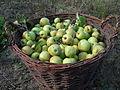 Apples in a bascket.jpg