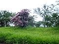 Araxá (3241366857).jpg