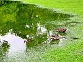 Arboretum - 'Land unter' nach Gewittersturm 2012-07-03 17-41-21 (P7000).JPG