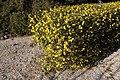 Arboretum de Canet-en-Roussillon le 8 février 2016 - 13.jpg