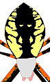 Argiope aurantia abdomen black and yellow design.jpg