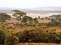 Arne, UK - panoramio - Sławomir Hutryk.jpg
