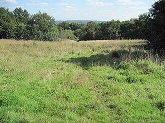 Arrandene Open Space and Featherstone Hill - Arrandene Open Space