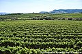 Arredores de Sabrosa - Portugal (7843577662).jpg