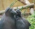 Artis Monkeys 2 (3562839903).jpg