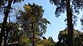 Arvores da praça - panoramio.jpg