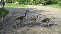 Assiniboine Park Zoo, Winnipeg (480569) (9445103061).jpg