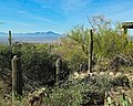 At the Sonoran Desert Museum (6142327842).jpg