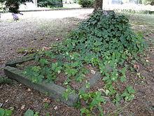 Grab von Julius Rietz auf dem Trinitatisfriedhof in Dresden (Quelle: Wikimedia)