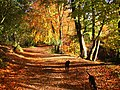 Autumn Colour, Delamere Forest - geograph.org.uk - 73478.jpg