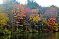 Autumn Leaves at Coe Lake (8084368084).jpg