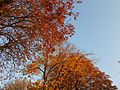 Autumnal Sutton Green, SUTTON, Surrey, Greater London (11).jpg