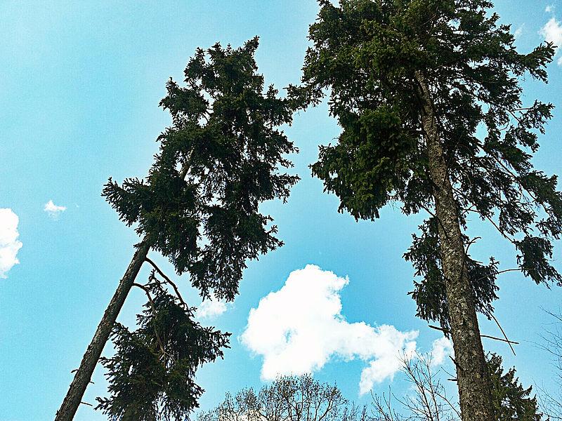 File:Bäume.jpg