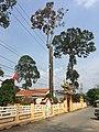 Bình Thủy, Châu Phú, An Giang, Vietnam - panoramio.jpg