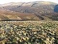Bail Hill hillside towards Lowther Hills - geograph.org.uk - 684915.jpg