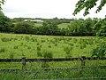 Ballynamullan Townland - geograph.org.uk - 1364005.jpg