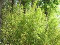 Bambous2.JPG