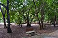 Banquinho em meio as árvores no Parque das Dunas.jpg