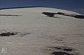 Bare expanse of snow where cedar destroyed (37755929491).jpg