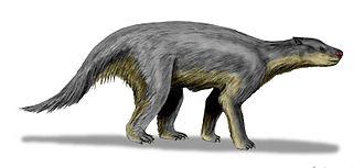 Pantodonta - Barylambda