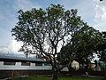 BayombongCathedraljf9967 11.JPG