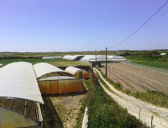 Economy of Póvoa de Varzim - A modern sand dune farm in Rio Alto.
