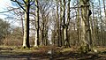 Beetsterzwaag forrest in April - panoramio (7).jpg