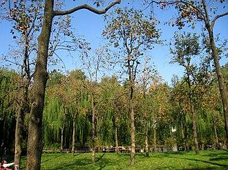 Beijing Zoo - The grounds