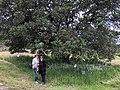 Belden Barns - April 2018 - Sarah Stierch 03.jpg