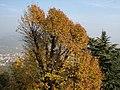 Bergamo 10.2011 - panoramio (5).jpg