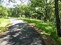 Bike trail and oak meadow near Willow Creek - panoramio.jpg