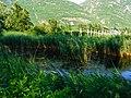 Biotope Lake of Gargazzone - Photo by Giovanni Ussi - Lake and surrounding vegetation (101) 11.jpg