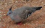 Bird 2a (31246755495).jpg