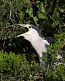 Birds forsythenwr (17544959620).jpg